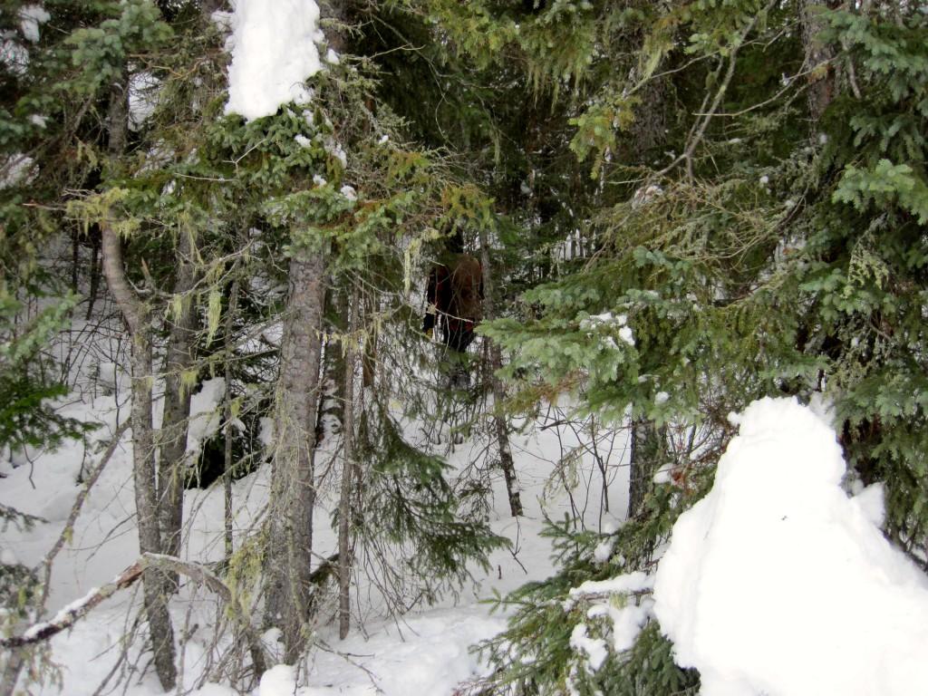 Boundary Waters winter adventure Gunflint Trail