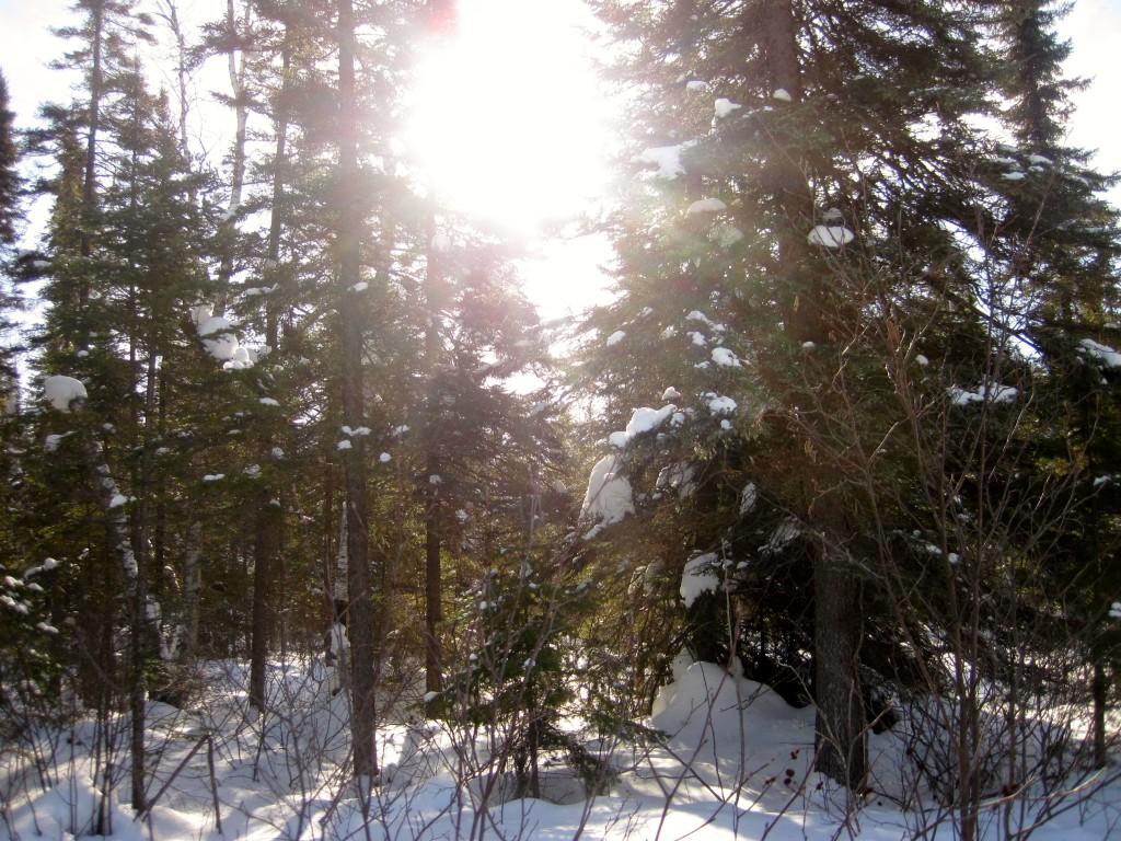 February Sunshine on Tuscarora Portage BWCA