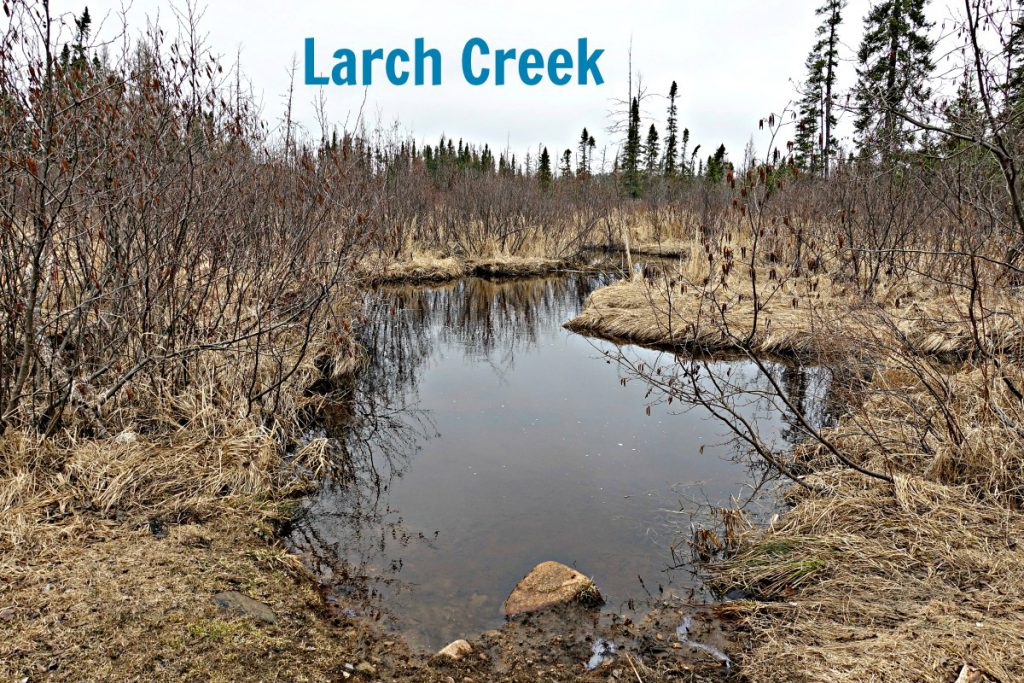 Larch Creek April 15 2017